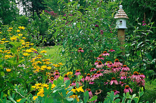 Birdhouse with coneflowers