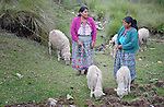 Teresa Diaz (left) talks with Elvira Mauricio as they tend to their sheep on a hillside in San Luis, a small Mam-speaking Maya village in Comitancillo, Guatemala. Women in the community have worked together on several agricultural and animal raising projects with help from the Maya Mam Association for Investigation and Development (AMMID).