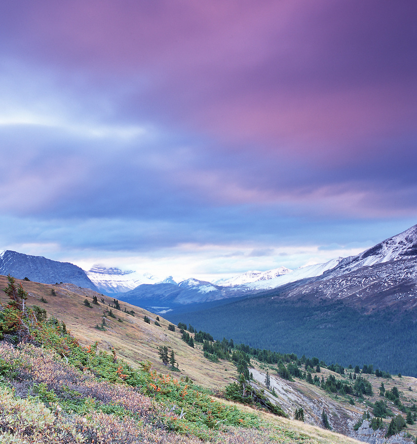 Purplish clouds are seen near sunrise above Wilcox pass near the Icefields Parkway in Alberta Canada.