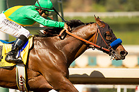 ARCADIA, CA  MARCH 11:  #4 Mastery, ridden by Mike Smith, alone in the stretch of the and wins the San Felipe Stakes (Grade ll) on March 11, 2017, at Santa Anita Park in Arcadia, Ca.(Photo by Casey Phillips/Eclipse Sportswire/Getty Images)