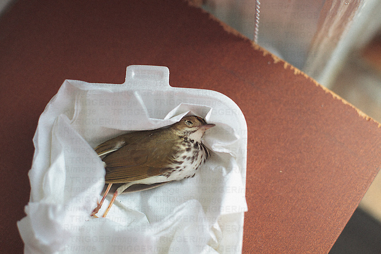 a dead bird is nested in a styrofoam foos container