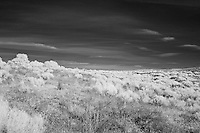 Desert scrub in Richland, WA.  a.k.a. The view behind my home.  Infrared (IR) photograph by fine art photographer Michael Kloth.