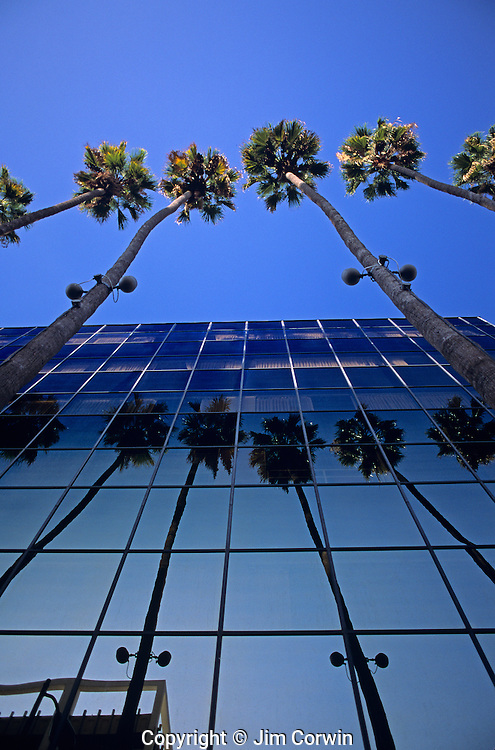 Downtown LA with building and palm trees reflected in skyscraper glass, downtown district, sunny blue sky, Los Angeles, California USA.