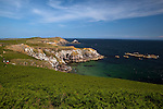 "View of the cliffs and bracken at Ardheen on the south, windward side of the Great Saltee, the larger of the Saltee Islands, off the coast of Co. Wexford, Ireland.  The ""Happy Hole"" cave is visible,  and the rock in the background is the ""MakeStone"". To the right are the Collough Rocks. © 2011 Dave Walsh"