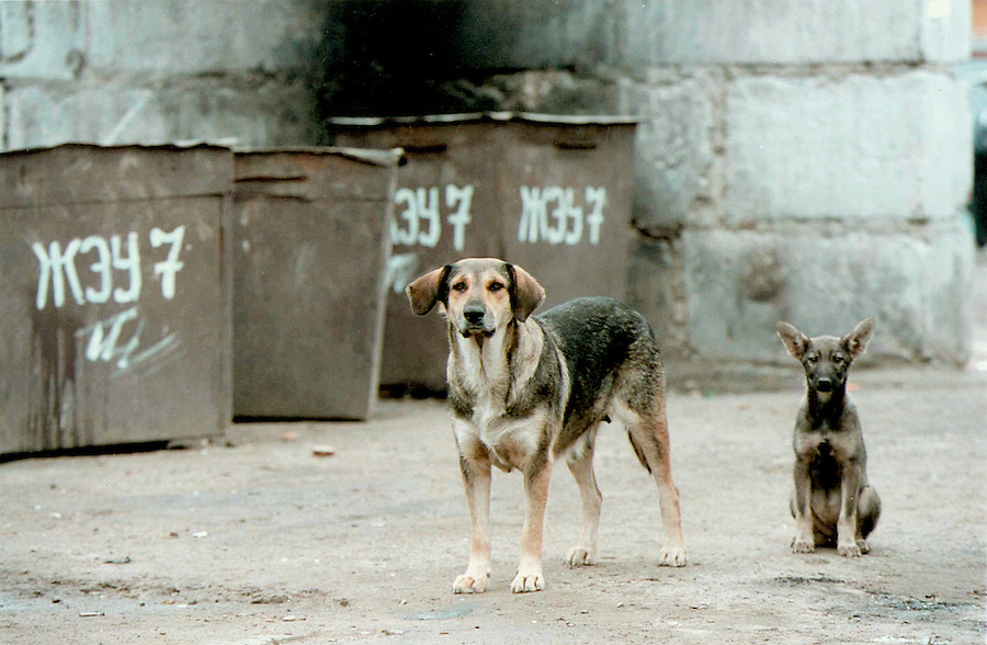 Reutov russia 17 07 1998 stray dogs and apartment rubbish bins on