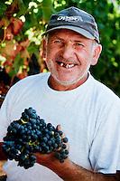 Harvest at 'Baglio di Pianetto' vineyard, Sicily, Italy