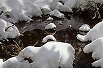 Small stream with snow covered rocks Mount Rainier National Park Washington State USA