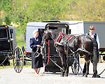 "Pennsylvania Dutch horse and buggies, Pennsylvania Dutch in Amish Country Lancaster County Pennsylvania, Amish, Horse and buggy with amish family on backroads of Pennsylvainia, buggy, amish family, buggy and horse, Commonwealth of Pennsylvania, Commonwealth of Pennsylvania, natives, Northeasterners, Middle Atlantic region, Philadelphia, Keystone State, 1802, Thirteen Colonies, Declaration of Independence, State of Independence, Liberty, Conestoga wagons, Quaker Province, Founding Fathers, 1774, Constitution written, Photography history, Fine art by Ron Bennett Photography.com, Stock Photography, Fine art Photography and Stock Photography by Ronald T. Bennett Photography ©, All rights reserved copyright Ron Bennett Photography.Com, FINE ART and STOCK PHOTOGRAPHY FOR SALE, CLICK ON  ""ADD TO CART"" FOR PRICING,"