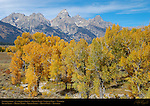 Cottonwoods, Cathedral Group, South Teton, Middle Teton, Grand Teton, Mount Owen, Teewinot, Grand Teton National Park, Wyoming