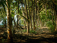Coconut trail along the red road in Puna, Hawaii