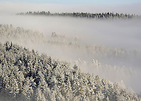 Winter forest near Holmenkollen ski jump.  (Photo:Fredrik Naumann/Felix Fetures.)