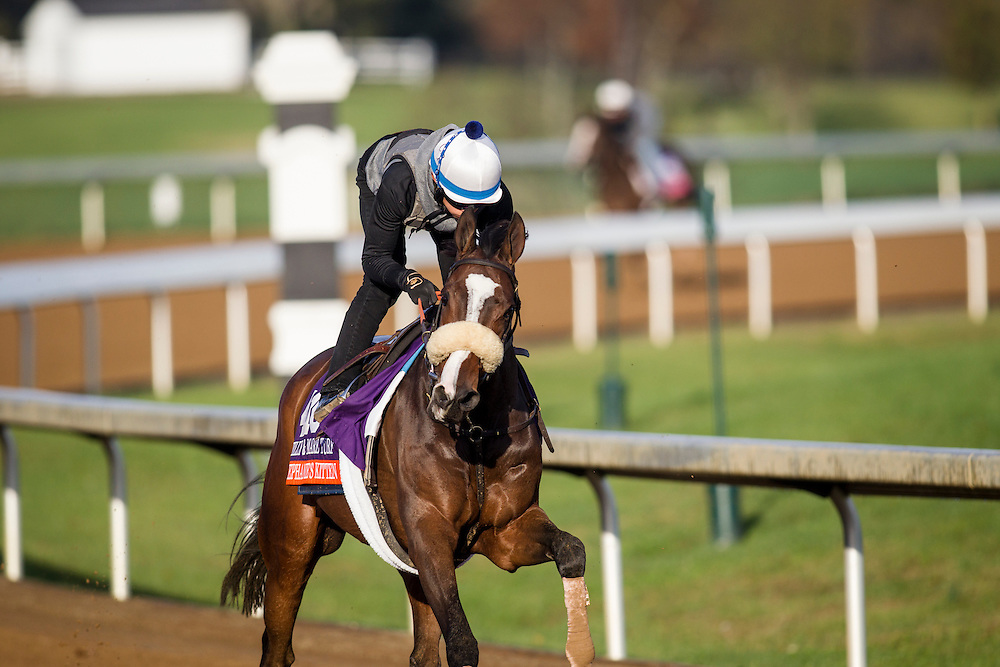 October 29, 2015:   Stephanie's Kitten, trained by Chad C. Brown and owned by Kenneth L. and Sarah K. Ramsey, exercises in preparation for the Breeders' Cup Filly & Mare Turf at Keeneland Race Track in Lexington, Kentucky. Alex Evers/ESW/CSM