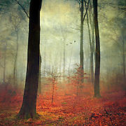 Autumnly forest on a rainy &amp; misty day. Texturized photograph.<br />