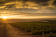 Sunset at Seven Hills Vineyard, Walla Walla, Washington
