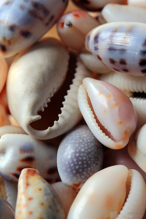 Macro image of a collection of cowrie shells
