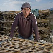 Ilia Themelko (40) working in a field near the village of Lemos, Greece