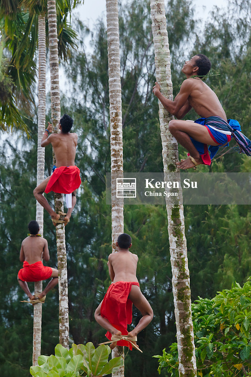 Yapese men in traditional clothing competing to climb coconut trees at Yap Day Festival, Yap Island, Federated States of Micronesia