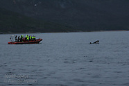 04: WINTER TOUR BOATS & ORCAS