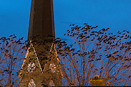 Middletown, New York - Crows gather in the trees by the steeple of Grace Episcopal Church on  Dec. 31, 2015. The black streaks in the sky are crows during the long exposure.