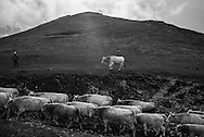 The last trasumanche. After a 6,5 earthquake hit central Italy on October 30th 2016 shepherds are forced to evaquate form the village of Castelluccio di Norcia  totaly destroyed after the sisma.  Federico Scoppa/CAPTA