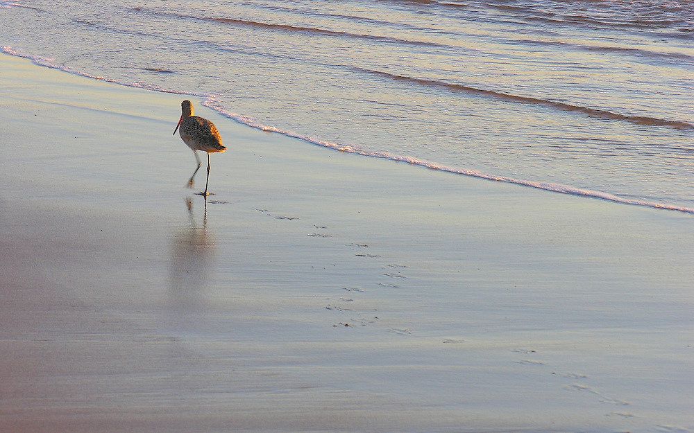 A lone bird leaves its footprints in the sand.