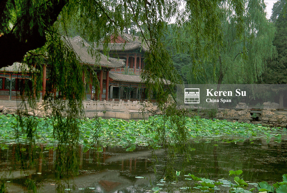 Willow tree with a pond of lilies in the Summer Palace, Beijing, China