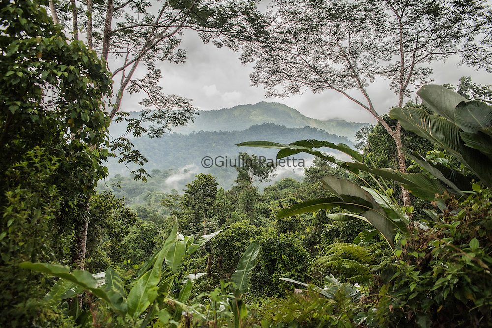 View from the top of a hill of the forest surrounding Finca Bellavista