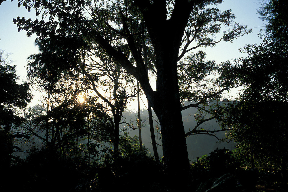 Thailand, Doi Inthanon National Park, Morning sun lights jungle in hills near Chiang Mai on winter morning
