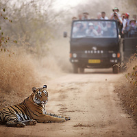 TIGER RELOCATION IN INDIA