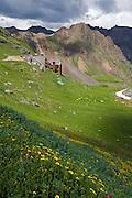Governor Basin, Mountain Top Mine, wildflowers