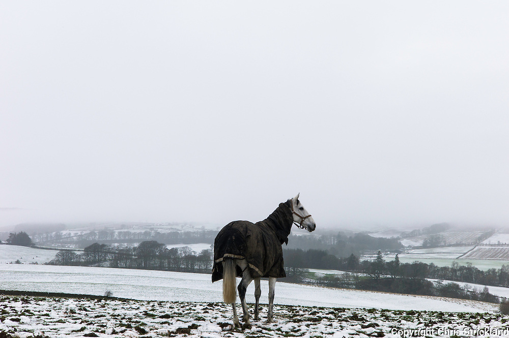 Bonchester Bridge, Hawick, Scotland, UK. 19th January 2016. Racehorse Carters Rest has some down time in a field near Hawick in the Borders, wrapped up well in a New Zealand rug in the snow and fog.