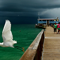 ANNA MARIA ISLAND, FL -- July 9, 2009 -- A white egret takes off as a storm approaches at The Rod & Reel Pier on Anna Maria Island in Manatee County, Fla., on Thursday, July 9, 2009.  (Chip Litherland for The New York Times)