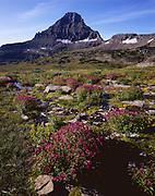 AA01141-04...MONTANA - Monkey flowers in meadow below Reynolds Mountain near Logan Pass in Glacier National Park.