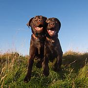Clara and Mabel