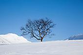 Winter - Vinter