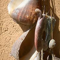 Sea shells on a wall