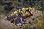 Autumn Darter<br />