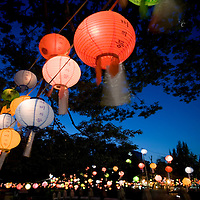 South Korea, Seoul,  Paper Lanterns hanging from trees at dusk in Jangchung dong Park during festival marking Buddha's birthsday