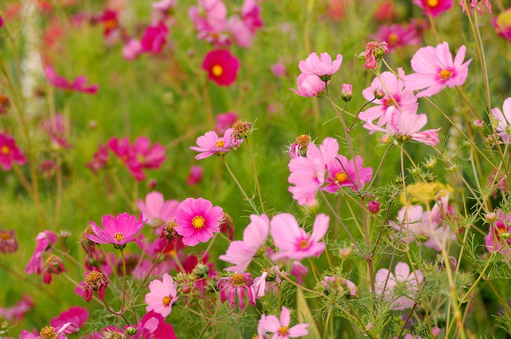 Flowers, Santa Cruz, California, United States of America