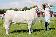 The Angus Show, Brechin, Saturday 8th June, 2013. Charolais champ from W K & P Drysdale