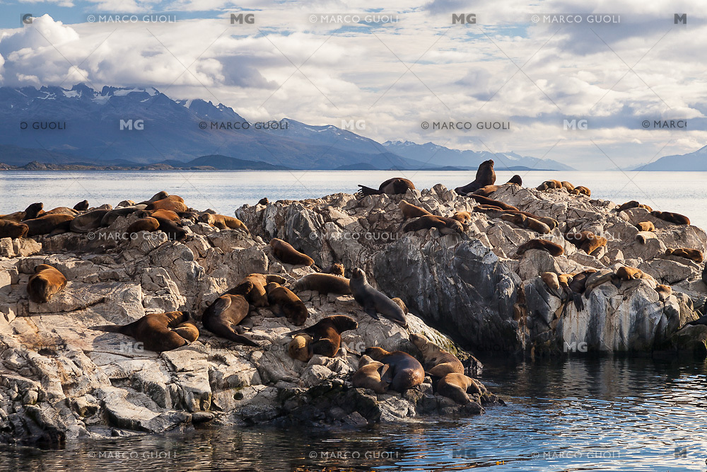 ISLOTE CON LEONES MARINOS EN EL CANAL BEAGLE, USHUAIA, PROVINCIA DE TIERRA DEL FUEGO, ARGENTINA (PHOTO BY © MARCO GUOLI - ALL RIGHTS RESERVED. CONTACT THE AUTHOR FOR ANY KIND OF IMAGE REPRODUCTION)
