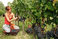 Harvest at Chateau Petrus, Pomerol, France