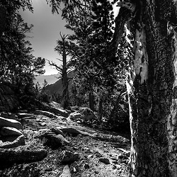 Black and white of trees, rocks and sunburst in high sierras