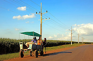Horse and wagon carrying a family and their pig down a country road near Rodas, Cienfuegos Province, Cuba.