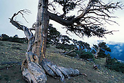 Windy Ridge, Mount Bross, Mt. Alma, Colorado