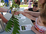 "Girl and her family experiencing their first caterpillars at ""The Caterpillar Lab's"" stand at the Keene Farmer's Market."