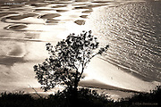 A hillside tree is sillouetted by dramatic sunlight reflecting off the vast bay of Traeth Coch, (Red Wharf Bay) which at low tide reveals a pattern of sand cusps in the wet sand which reflect the bright sunshine. Small figures at the water's edge on the shoreline show the scale of this beach. <br />