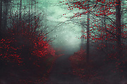Misty morning in the forest<br /> Exclusive prints on CURIOOS:<br /> https://www.curioos.com/product/print/wounded-3