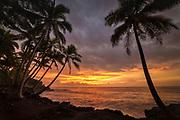 Coconut palm trees and sunrise at Kama'ili, Kalapana coast, Big Island of Hawaii.