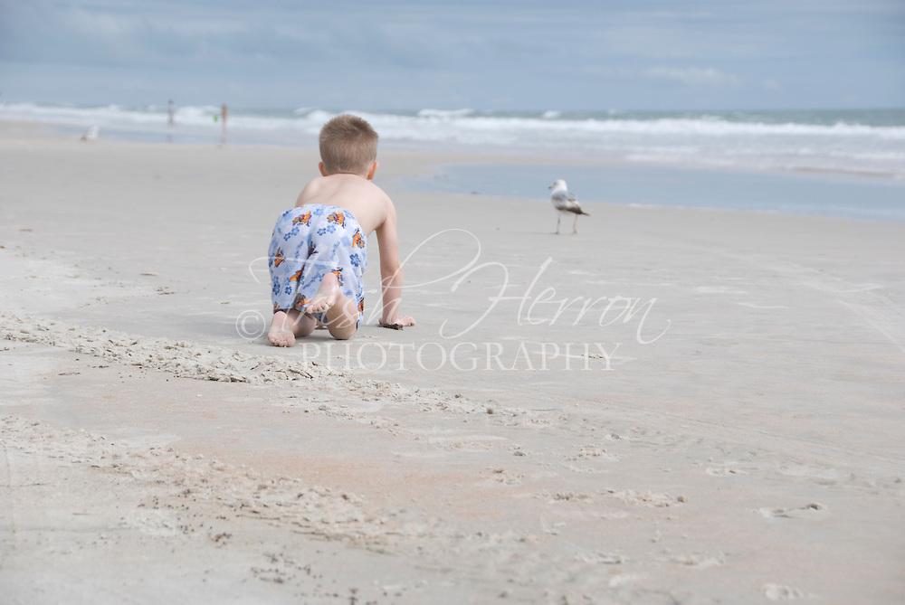 A young boy crawls toward a gull at the beach.